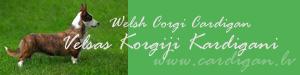 VELSAS KORGIJS KARDIGANS/CARDIGAN WELSH CORGI