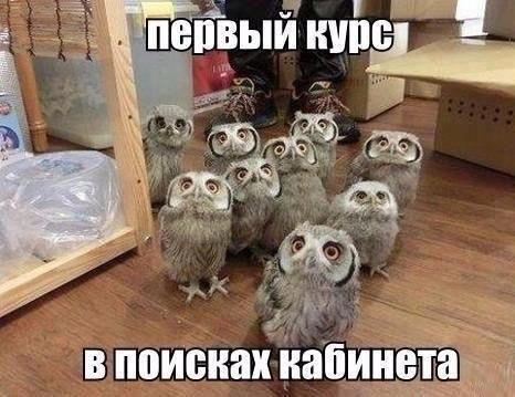 www.bildites.lv/images/o50uc5fds2zhqc45bse.jpg